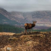 Deer Glen Etiv IV