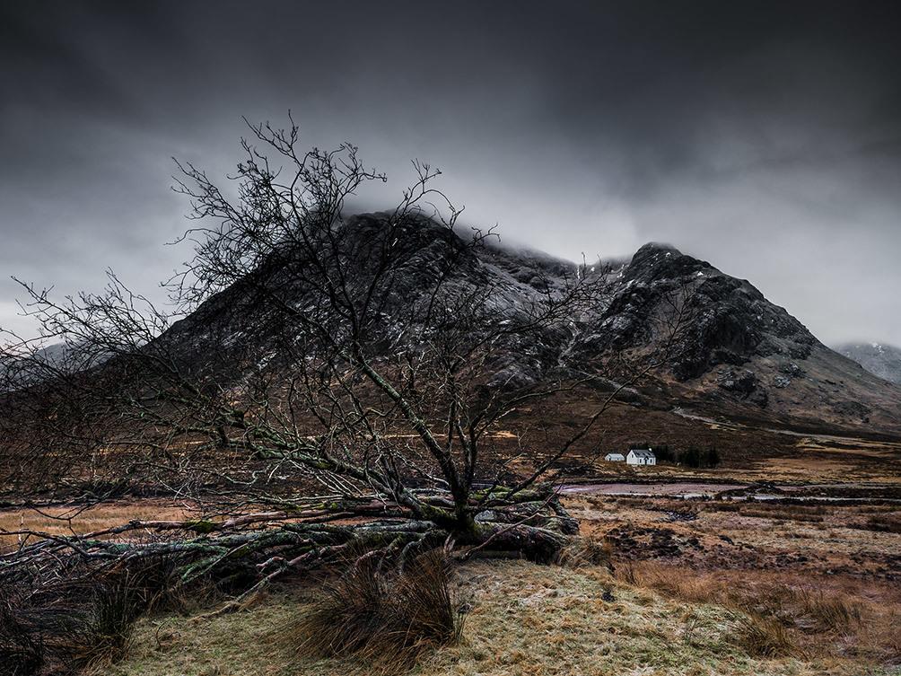 White Hut and Tree