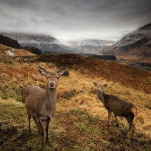 Deer Glen Etiv I