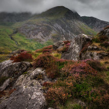 Snowdonain Heather