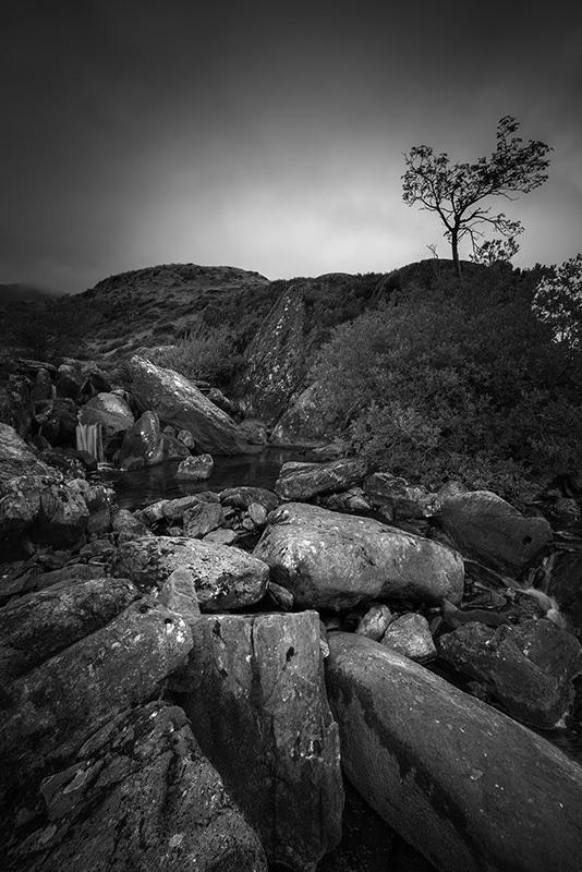Lone Tree Ogwen