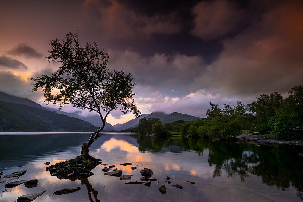 Lone Tree Reflections I