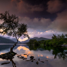 Lone Tree Reflections I