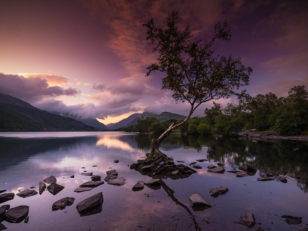 Lone Tree Pre Dawn II