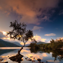 Lone Tree Golden Dawn II