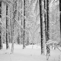 Snowy-Forest-Austria