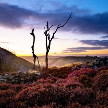Dead Tree-Stiperstones