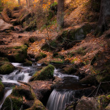 Wyming 'Fairy' Brook Autumn II