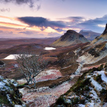 Quiraing Lone Tree Winter