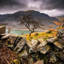 Twisted Tree-Snowdonia
