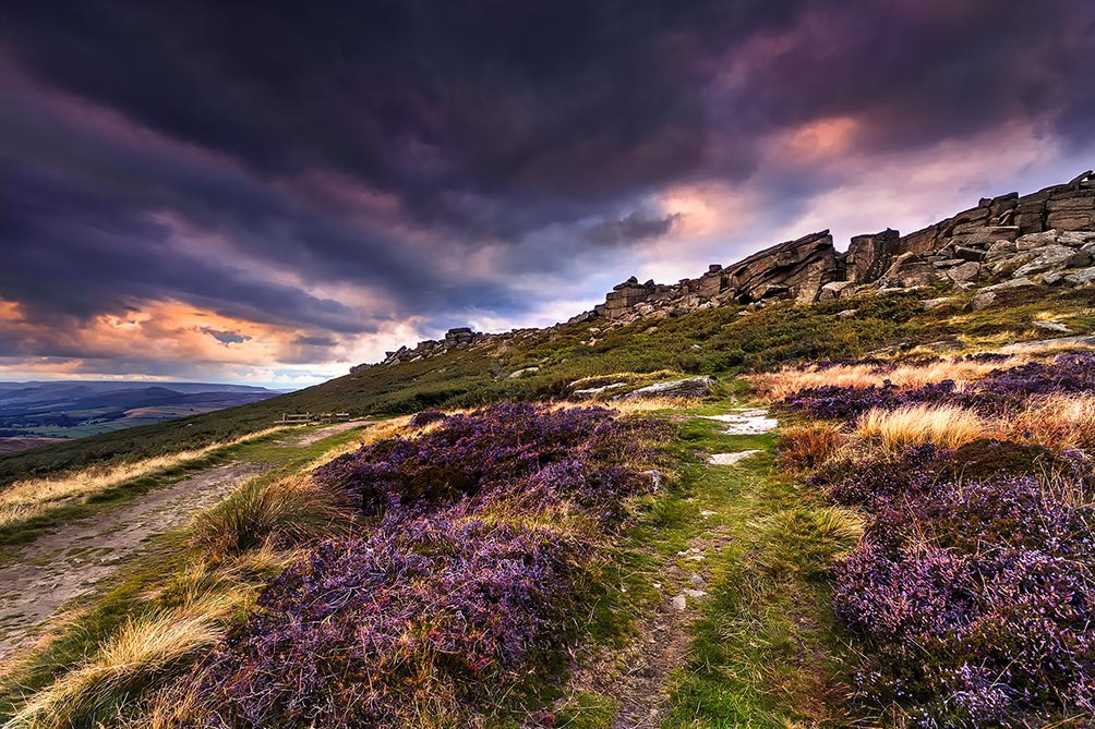 Purple Heather-Stanage Edge