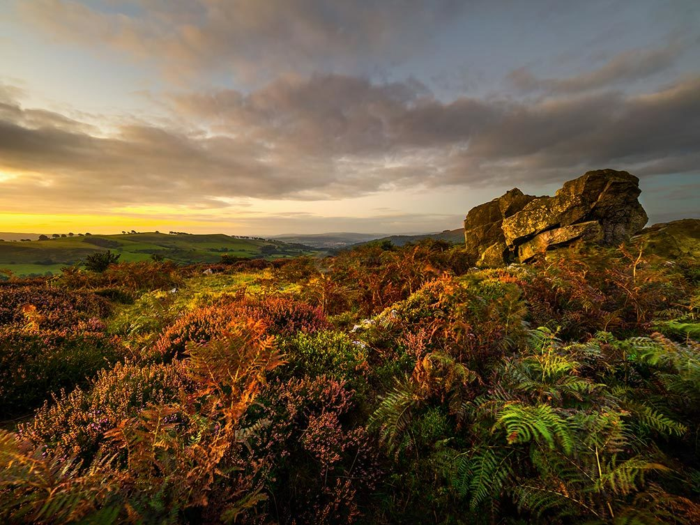 stiperstones-heather-sunset-1