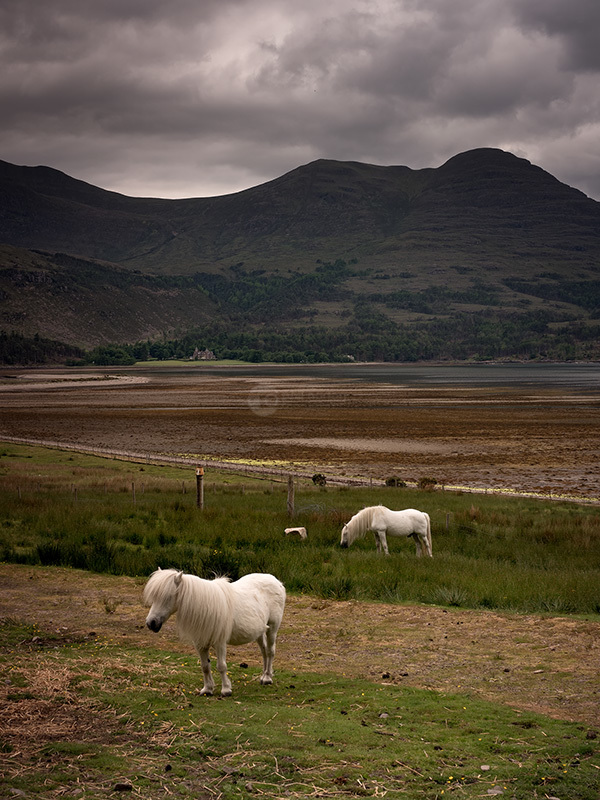 With Horses Loch Torridon