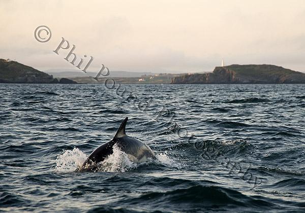 Dolphin 1348