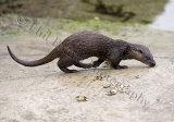 Otter 1419