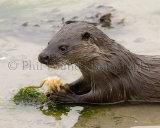 Otter 1838
