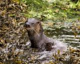 Otter 2961