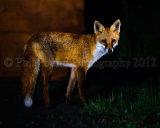 Fox 4688