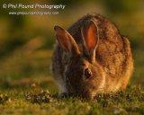 Rabbit 7510