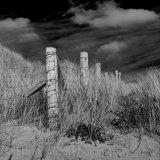 Barley Cove 9645