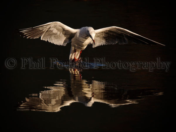 Nature Photographer of the Year 2011
