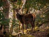 Deer 0016