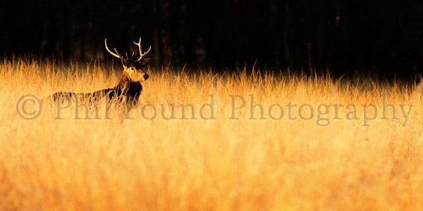 Deer 1759