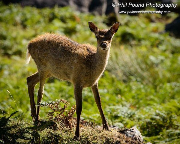 Deer 7440