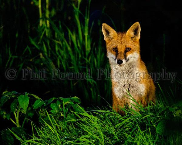 Fox 4247