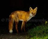 Fox 4302