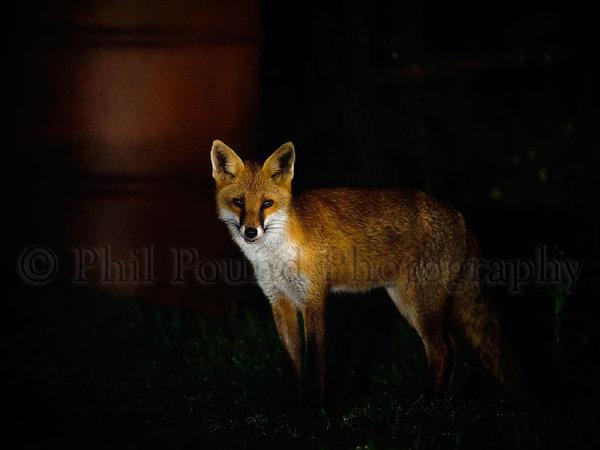 Fox 4641
