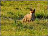 Fox 6231a
