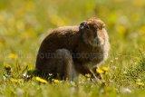 Hare 0184