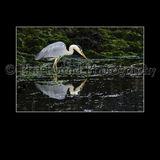 Heron 3401