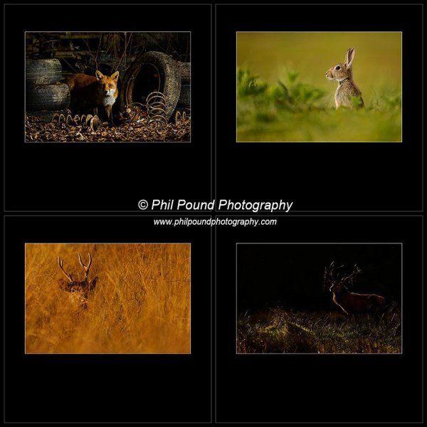 Winner IPPA Wildlife Portfolio 2014