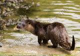 Otter 3004