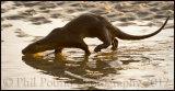 Otter 4757