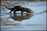 Otter 5032