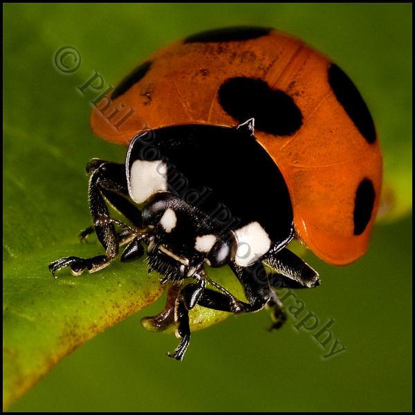 Ladybird 6394