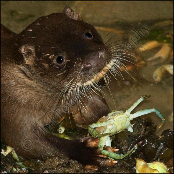 Otter 0310