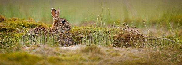 Rabbit 3325