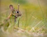 Rabbit 3344