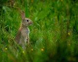 Rabbit 4256