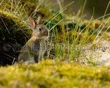 Rabbit 5130