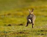 Rabbit 5415