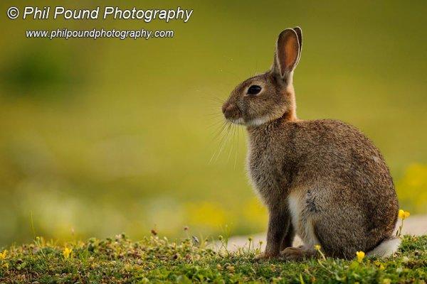 Rabbit 5830