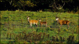 Red Deer 9098