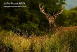 Stag 5937