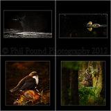 Winner Wildlife Portfolio category IPPA 2012.