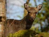 Deer 6689